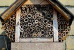 Groningen krijgt 200 bijenhotels