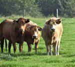 Vers en duurzaam vlees per post dankzij slimme innovatie