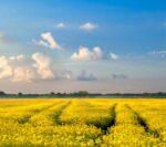 Boze professoren verhitten het debat over biobrandstof