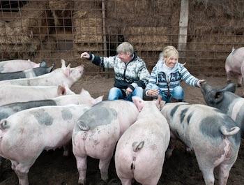 samen een varken kopen