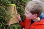 Gratis vogelvriendelijke struiken en nestkasten voor basisscholen
