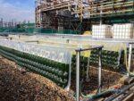Eemshaven krijgt algenkwekerij