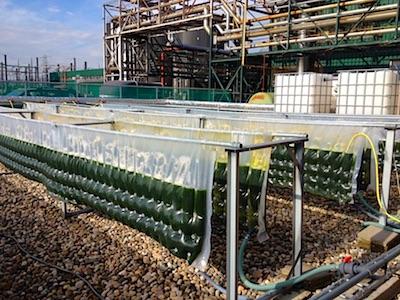 algaecom
