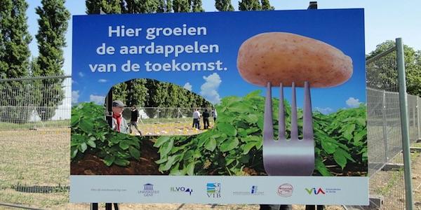 ggo gmo aardappelen
