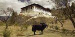 Eosta helpt Bhutan bij 100% bio landbouwbeleid