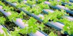 Biologische landbouw kan de hele wereld voeden