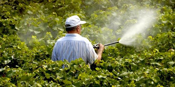 EU wil omstreden pesticiden zonder veiligheidstoets verlengen