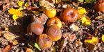 Duurzame batterij wordt gemaakt van rotte appels