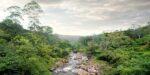 Jonge bossen nemen elf keer meer CO2 op dan oerbos