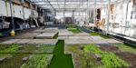 Is stadslandbouw financieel wel duurzaam?