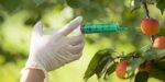Patent op planten maar deels afgeschaft