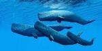 Walvissen verhongeren met hun buik vol plastic