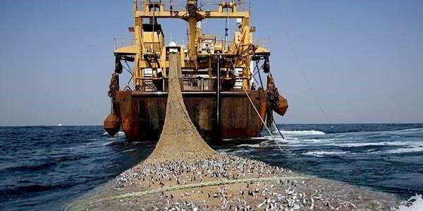 Visstand in de Noordzee herstelt te langzaam