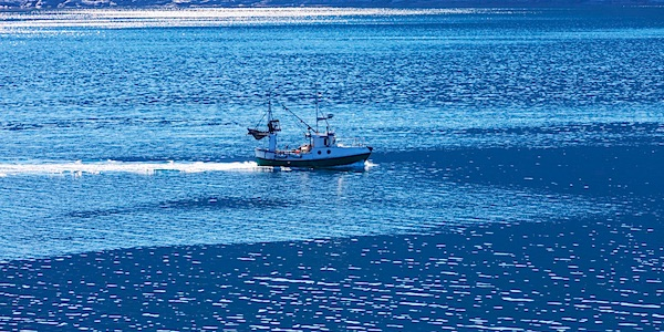 Nederland een van de grootste overbevissers van Europa