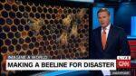 Neergang bijenstand blijft de mens ernstig bedreigen
