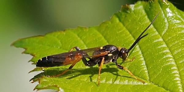 Help, onze insecten sterven uit