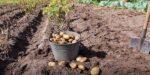 Hoe haal je een volle oogst uit nieuwe voedselnetwerken