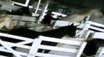 Kabinet wil paardenmiddel uit bloedboerderijen nu ook weren