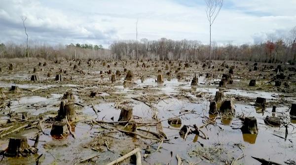 Kappen met boskap van levensbelang voor klimaat