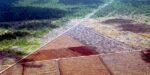 Verzekeraars sluiten ogen voor landroof en ontbossing