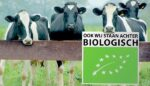 Uitspraak rechter redt biologische melkkoeien van de slacht