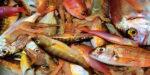 Restauranthouder zet onbekende vissen op de kaart van Bijvangst