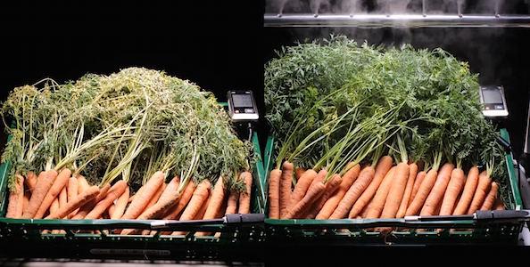 wortels voedselverspilling