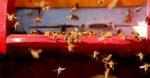 Bewijs voor oorzaak bijensterfte is geleverd