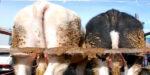 Wakker Dier helpt biologische boeren bij rechtszaak tegen de staat