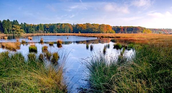 Kwaliteit Europese natuur holt achteruit
