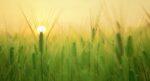 Een hogere landbouwopbrengst begint bij de bodem