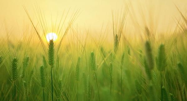 Biologische landbouw even productief als reguliere