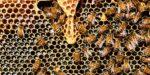 Bijenhoning uit de hele wereld bevat omstreden bestrijdingsmiddelen