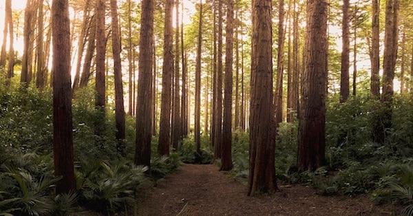 Bossen, de longen van de aarde?