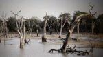 Klimaatadaptatie is nog geen prioriteit voor gemeenten