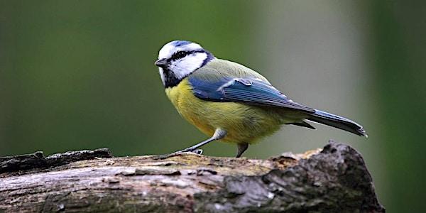 We gaan weer tuinvogels tellen met de Nationale Tuinvogeltelling