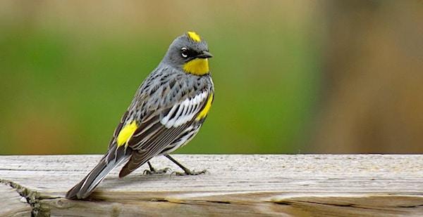 vogelsterfte vogels