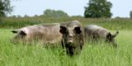 EU-parlement keurt biologische wetgeving goed