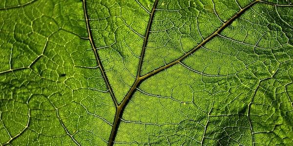 blad biomimicry