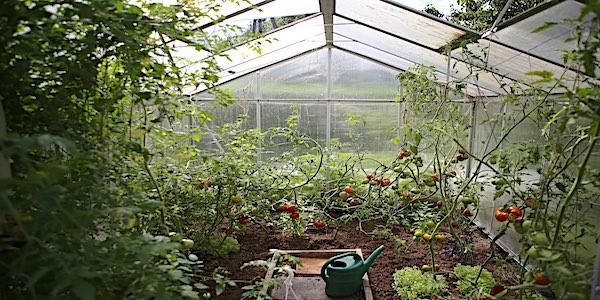 tomaten zelfvoorzienend