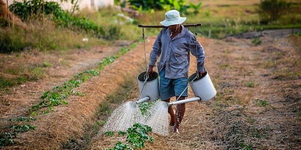 Kleine boeren belangrijker voor voedselproductie dan gedacht
