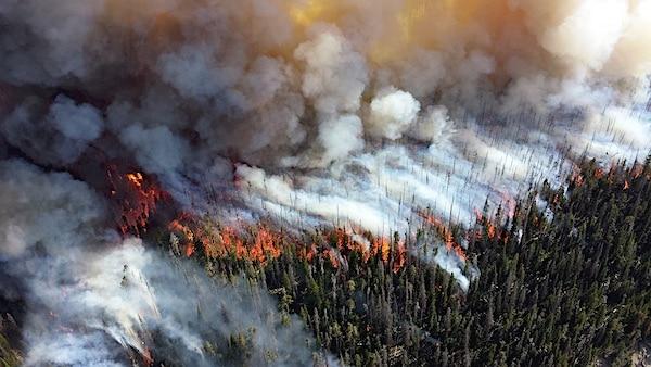 Drones verzamelen enorme hoeveelheid informatie over bossen
