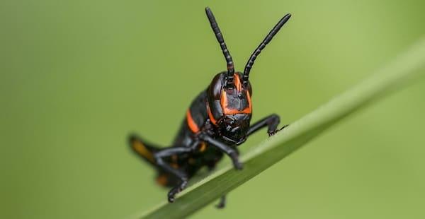 Half miljoen insectensoorten gaat verdwijnen