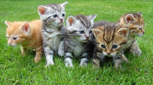 kattenjacht in groningen