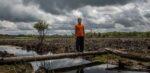 Nederlandse banken laten consumenten onbewust beleggen in foute palmoliebedrijven