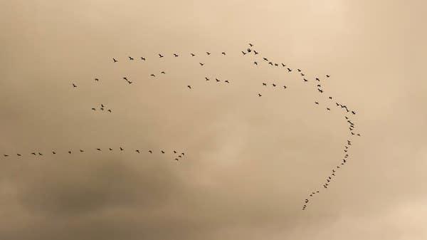 vogeltrek vogeltelling