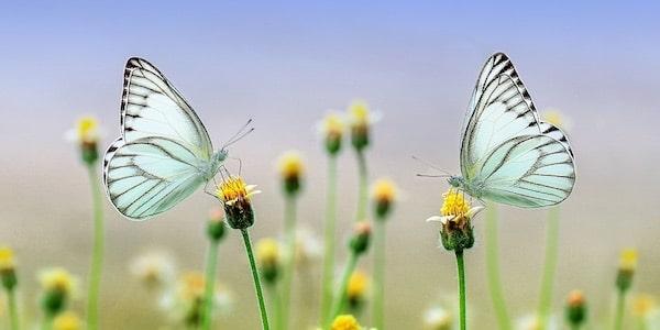 Zijn er over 100 jaar geen insecten meer?