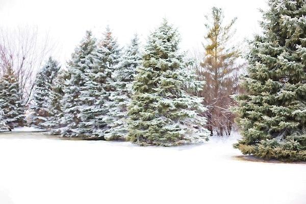 Kerstmis circulair: laat verf maken van je kerstboom