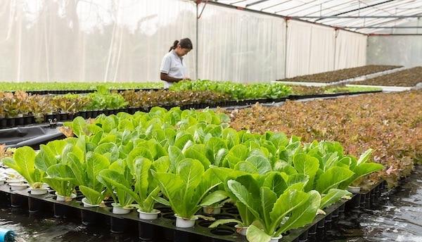 Duurzame landbouw kan heel Europa voeden