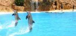 Petitie: Maak Nederland dolfinariumvrij